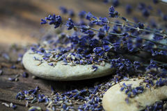 Dried Lavender - Stock Photo Royalty Free Stock Images