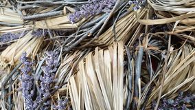 Dried Lavender with straw background stock images