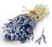 Dried lavender on a white background Stock Image