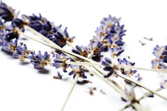 Dried lavender on white background Stock Photos