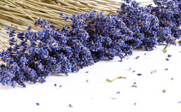Dried Lavender Stock Image