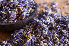 Dried lavender. The wonderful smell of dried lavender: for aromatherapy, decoration, wellness, spa Royalty Free Stock Images