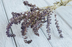 Dried lavender on wooden background Stock Images
