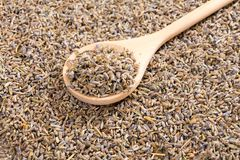 Dried lavender on wooden spoon. Stock Photography