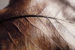 Dried Leaf Royalty Free Stock Photography