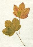 Dried leaf. On handmade vintage paper Stock Images