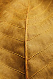 Dried leaf Stock Photo