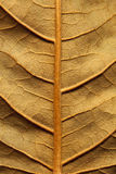 Dried leaf. Fine details and very high-res for backgronds Royalty Free Stock Images