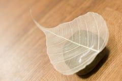 dried leaf Στοκ φωτογραφία με δικαίωμα ελεύθερης χρήσης