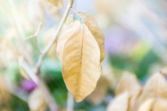 Dried leaf. Beautiful nature background Royalty Free Stock Images