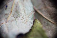 Dried leaf Stock Photos