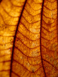 Dried leaf closeup Stock Photography