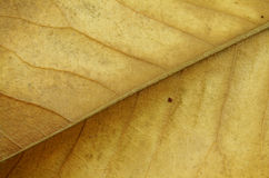 Dried Leaf Closeup Stock Image