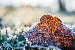Dried Leaf Cover by Snow at Daytime Royalty Free Stock Image