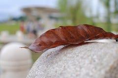 Dried Leaf. At Desa Parkcity Stock Images