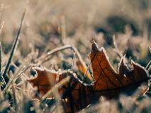 Dried Leaf on Grass Field in Bokeh Photography Stock Photos
