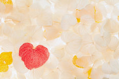 Dried leaf of heart shape Stock Photos