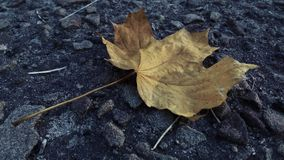 Dried leaf on the pavement stock image