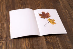 With a dried leaf is a sheet of paper Royalty Free Stock Photography