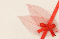 Dried Leaf skeleton with gift ribbon Stock Image