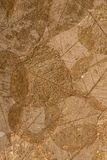 Dried Leaf Skeleton Sheet Royalty Free Stock Images