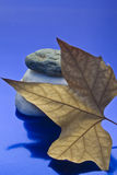 Dried leaf and stone. Showing a leaf and stones on a blue background Royalty Free Stock Photo