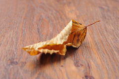 Dried leaf on the table Royalty Free Stock Photography