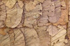 Dried leaf wall Stock Photo
