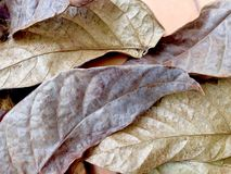 Dried leaf wallpaper Royalty Free Stock Photography