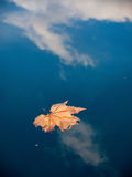 Dried leaf in water 1 Stock Image