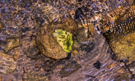 Dried leaf in the water on the rocks and pebbles Royalty Free Stock Photo