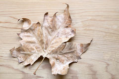 Dried leaf Stock Image
