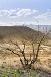 Dried leafless tree at Painted Hills Royalty Free Stock Photos