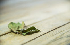 Dried leave on wooden floor Royalty Free Stock Photography