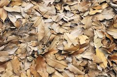 Dried Brown Leaves Stock Image