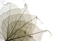 Dried leaves 9 Royalty Free Stock Photography