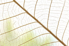 Dried leaves abstract floral background Royalty Free Stock Image