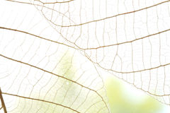 Dried leaves abstract floral background Royalty Free Stock Images