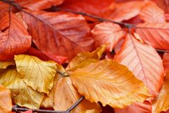Dried leaves during Autumn Royalty Free Stock Images