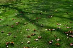 Dry leaves in autumn unshine on grass, sun shining on fallen leaves. royalty free stock photos