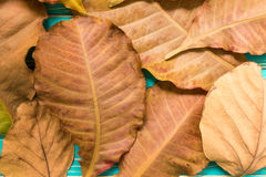 Dried Leaves Background / Dried Leaves / Dried Leaves on Vintage Wooden Background Royalty Free Stock Photography