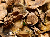 Dried leaves background Stock Photography