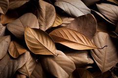 Dried leaves beautiful background Royalty Free Stock Photo