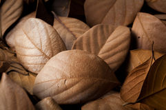Dried leaves beautiful background Stock Photo