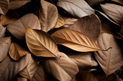 Dried leaves beautiful background Royalty Free Stock Photography
