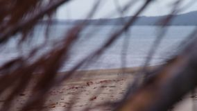 Dried leaves being blown by the wind. A close up shot of brown dry leaves along the shoreline. The sea is seen at the background of the shot stock video footage