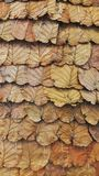 Dried leaves brown leaves background Stock Photography