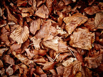 Dried leaves close up Royalty Free Stock Photos