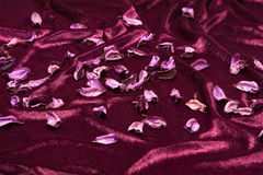 Dried leaves of cotton plants. Painted and dried leaves of cotton plants on purple satin fabric Stock Image