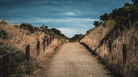 Dried Leaves Beside Empty Pathway during Daytime Royalty Free Stock Photo